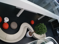 Comment choisir la plante idéale pour décorer votre bureau ?